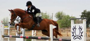 Belle show jumping at Woodland Stallion Station.