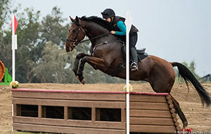 Best Kept Secret jumping a table on cross-country.
