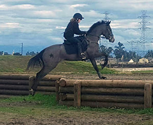 Roxy schooling cross-country