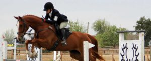Belle show jumping at WSS