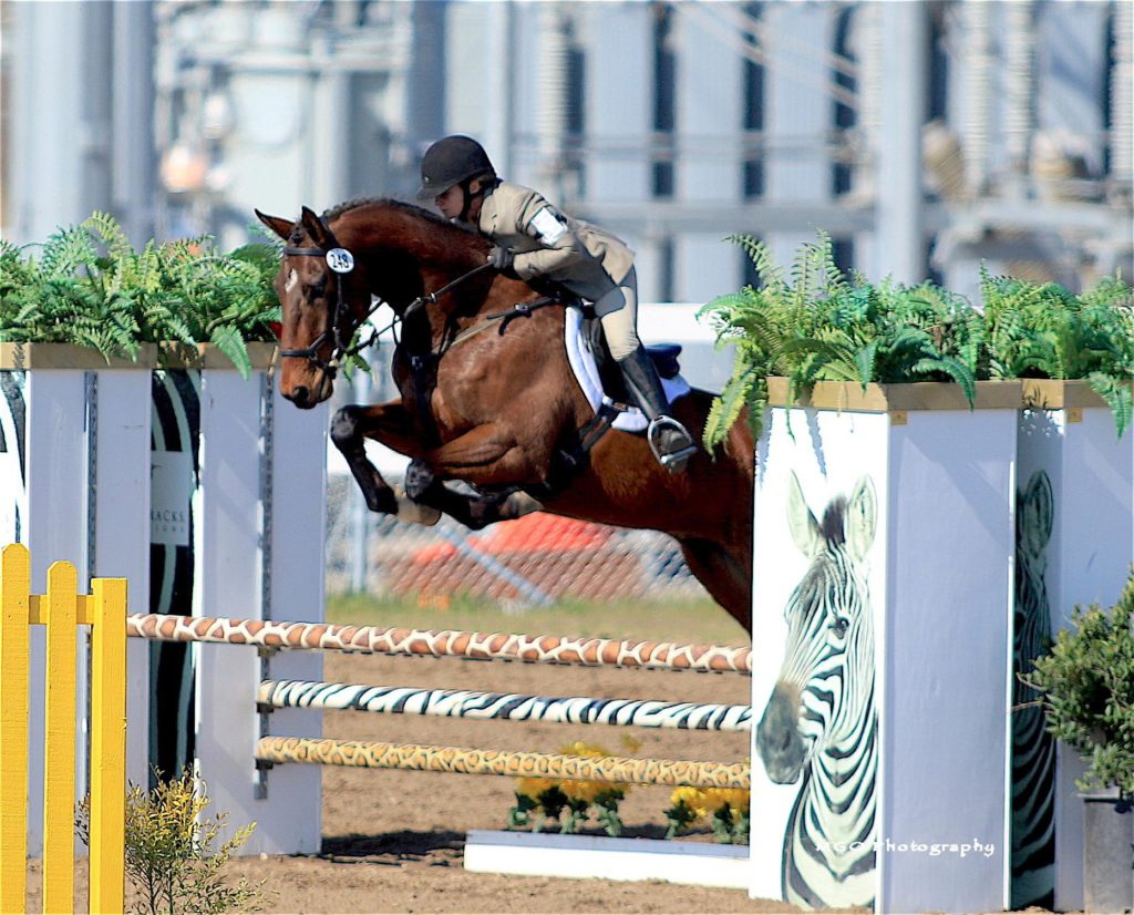 Lucky Seven show jumping.