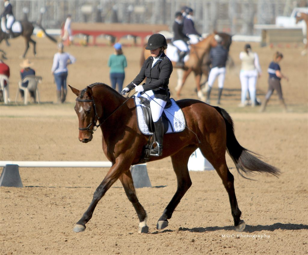 Trakehner gelding Lucky Seven in the dressage court.